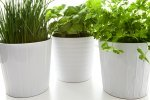 Keeping house plants healthy.