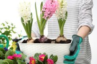 How to transplant plants indoors for winter.