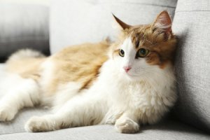 3 tips for cleaning up after pets