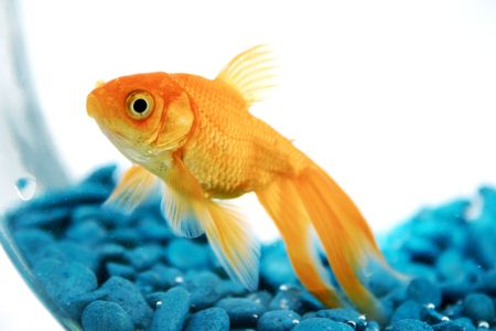 Best pet for kids by age
