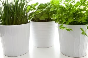 8 tips for keeping house plants healthy.