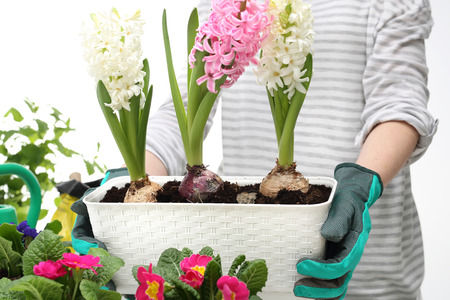 Tips for transplanting plants indoors for winter.