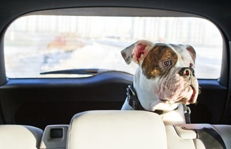 How to create a pet car survival kit.