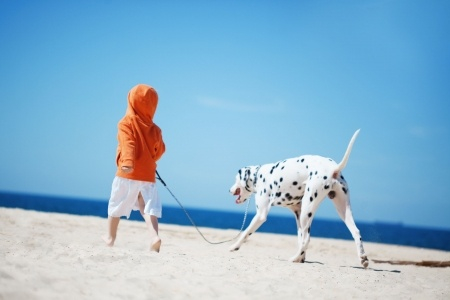 Pet chores for kids by age.