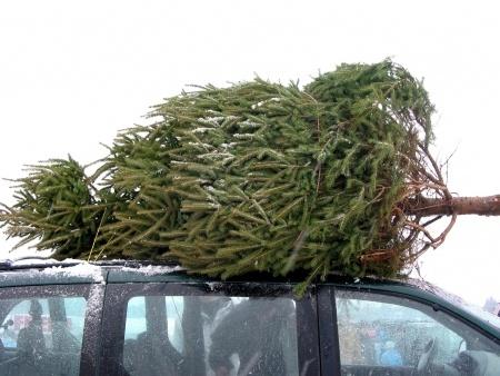 Christmas tree tips.