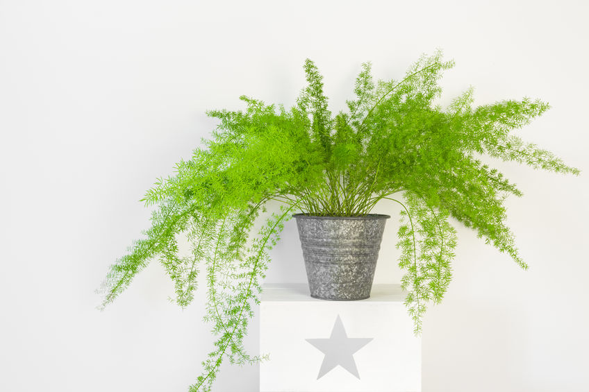 6 Easy indoor plants you can't kill.