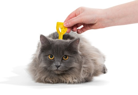 Less toxic flea removal methods for your pet and home.