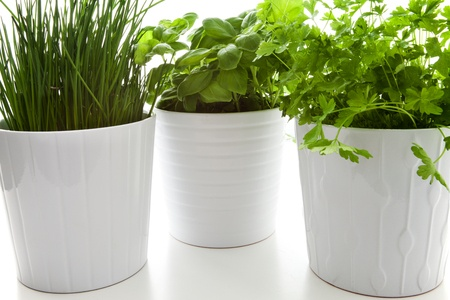 Keeping House Plants Healthy